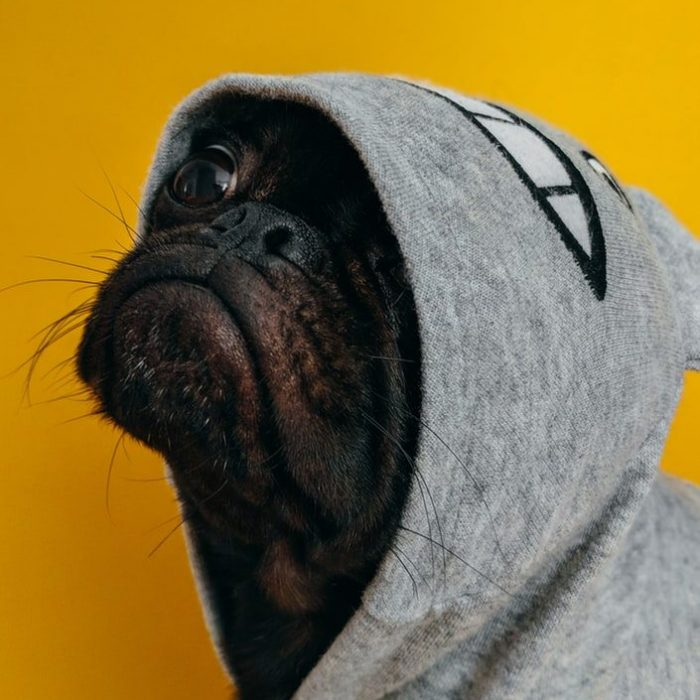 Winter Dog Hoodies - Post Thumbnail